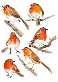8 best burung images on pinterest bird art watercolor bird and