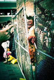 twitching banshee spirit halloween 136 best zombie zoo images on pinterest zombies halloween