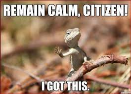 Reptile Memes - does anyone have some good lizard memes miss clue message boards