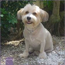 Is It Legal To Bury Your Dog In The Backyard - pet euthanasia veterinarians on when it u0027s time cost and more