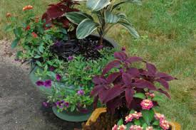 Plant Combination Ideas For Container Gardens 14 Potted Plant Combination Ideas Container Gardens Made For The