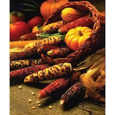 mini indian mixed ornamental corn seeds ne seed