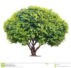 big tree stock image image 38303671