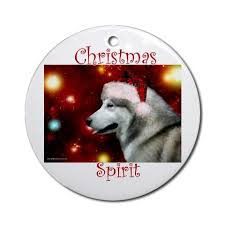 97 best all things husky malamute images on siberian