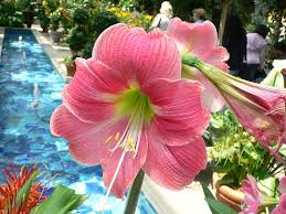 list of flower names a to z with pictures common and easy to grow