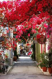 beautiful spring 16 of the most beautiful spring alleys from around the world