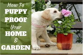 guide to puppy proofing your home and garden