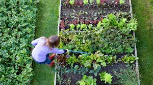 Buy Soil For Vegetable Garden by Ask Umbra Is It Safe To Use Newspaper As Garden Mulch Grist