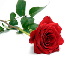 valentines day roses the meaning s day roses skips florist
