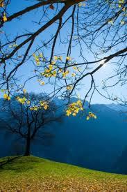 beautiful way lonely tree iphone 6 plus hd wallpaper hd