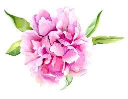 Peony Flowers by Pink Peony Flower Print Of Original Watercolor Painting