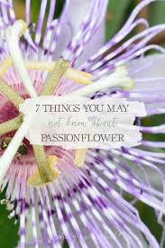 native plants passionflower vine grows 7 things you may not know about passionflower growing up herbal