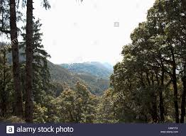 irresistible view of rolling hills in pollution free green stock