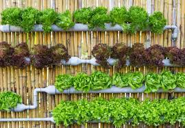 vertical vegetable garden design u2013 home design and decorating