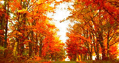 Why Fall Is The Best Season 10 Reasons Why Fall Is The Best Season Her Campus