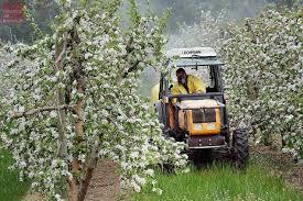 chambre r馮ionale d agriculture pays de la loire maine et loire le boom de l agriculture biologique courrier de