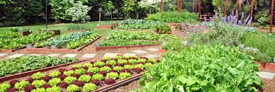 organic food inhabitat green design innovation architecture