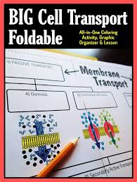 Cell Transport Skills Worksheet Answers Cell Membrane Transport Big Foldable For Notebook Or