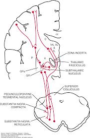parkinson u0027s disease physical rehabilitation 6e f a davis pt