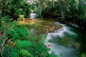river u0027s edge free green river nature wallpaper free green river