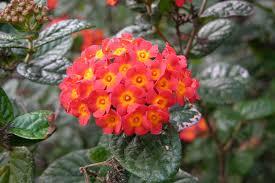 Native Plants In The Tropical Rainforest Fairchild Tropical Botanic Garden U003e Horticulture U003e 2014 Members U0027 Day