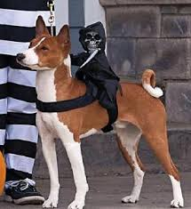 Halloween Dog Costume Halloween Dog Costumes Ride Grim Reaper Jack Latern Pumpkin