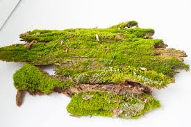 moss on driftwood small decorative moss driftwood with moss
