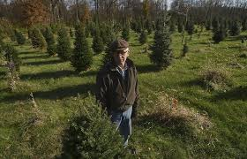 memories tradition drive sales of live trees local