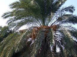learn trees plants names in igbo language