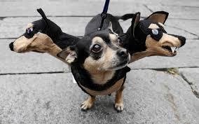 Spider Halloween Costume Dogs Halloween Dog Costume Halloween Costumes