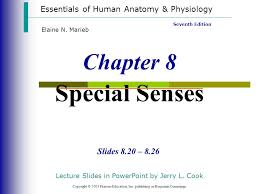Human Anatomy And Physiology Marieb 7th Edition Chapter 8 Special Senses Ppt Download