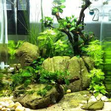 japanese aquascape 30l cube aquascaping pinterest cube aquariums and fish