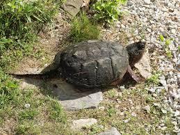 aquatic wildlife u0026 habitat in northeaster ontario nature trail
