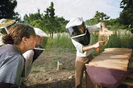 How To Make A Top Bar Beehive Keeping Bees Using The Top Bar Beekeeping Method Homesteading