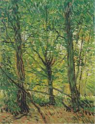 trees and undergrowth gogh series