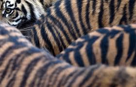 50 amazing animal photos of 2015 time com