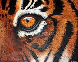 joe marais eye of the tiger animals wildlife original