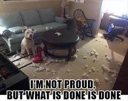 Mess Meme - dog and chewed mess funny funny pics story