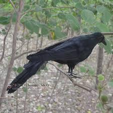 crow halloween costume reviews shopping crow halloween