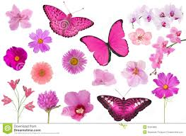 set of pink color flowers and butterflies isolated on white