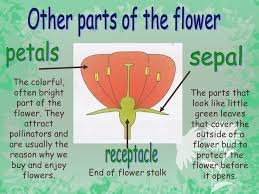 Part Of Flowers - parts of a flower 6th grade science ppt video online download