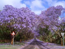 Tree With Purple Flowers 11 Magical Tree Tunnels You Should Definitely Take A Walk Through