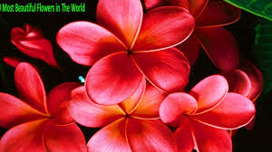 Beautiful Flower Pictures Top 10 Most Beautiful Flowers In The World Best Top 10 Most