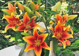 how to garden with lilies