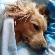 How To Get A Comfort Dog How Do You Know When It U0027s Time To Get A New Dog Help For Saying