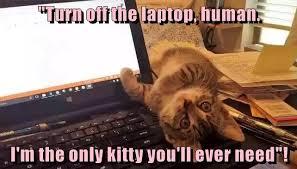 Cat Laptop Meme - turn off the laptop human cats pinterest cat funny cat