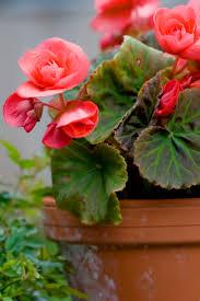 101 best flower pots functioning images on pinterest flower pots