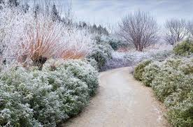 winter garden saravi win