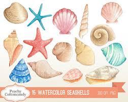where to buy seashells seashells clipart etsy