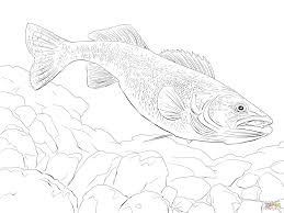 walleye fish coloring page free printable coloring pages